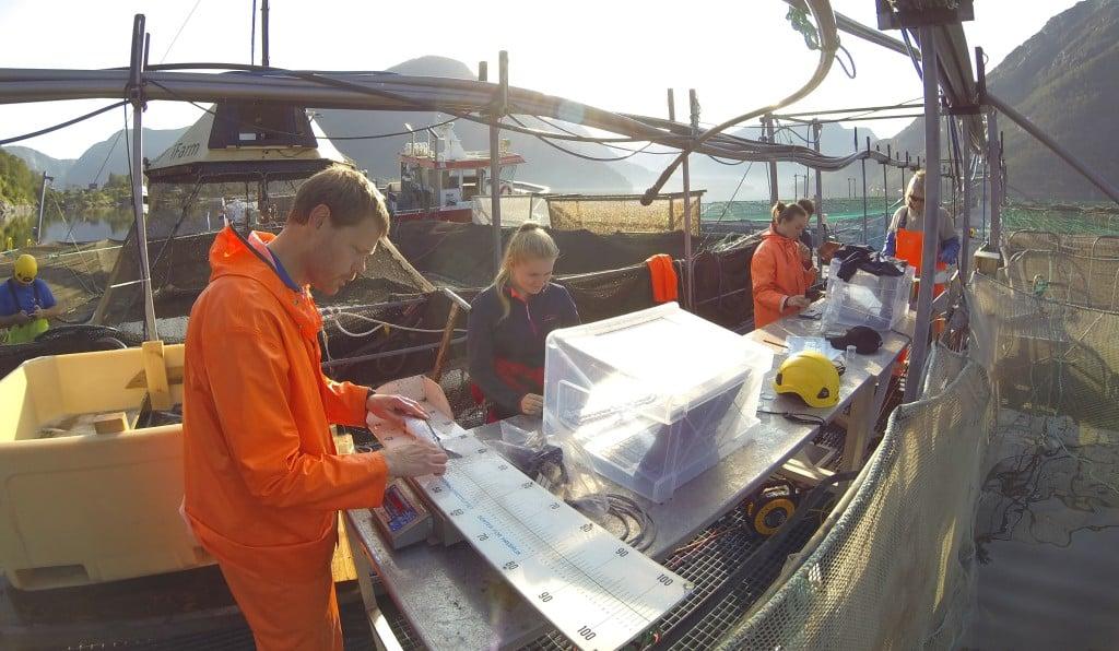Fiskevelferd kontrolleres ved småskala testing av iFarm